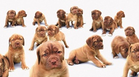 Beware The Dog Breeder Puppy For Sale Scam