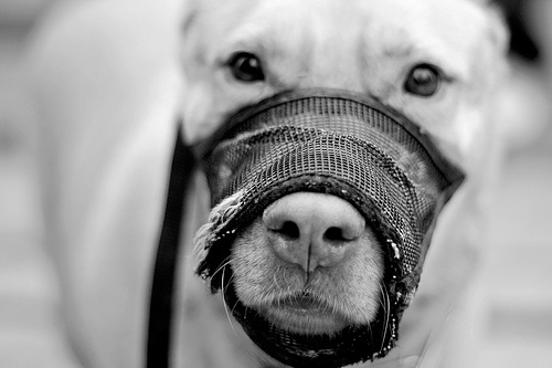 Should We Muzzle ALL Dogs In Public?